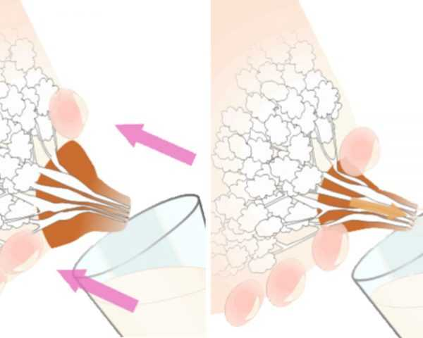 Массаж груди: как разработать грудные протоки и расцедить молоко после родов?