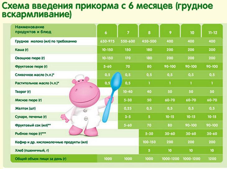 Как вводить прикорм: главные правила введения прикорма в рацион грудничков.