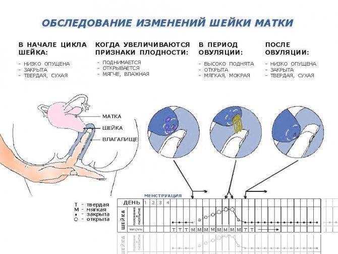 Какие выделения после овуляции если зачатие произошло?