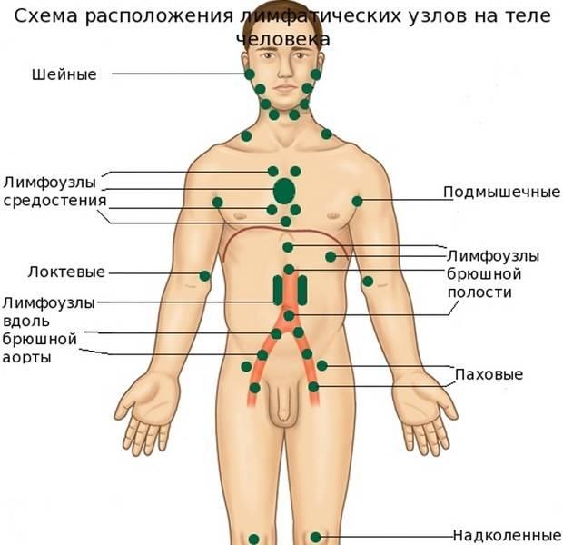 Воспаление лимфоузлов в паху у ребенка мальчика лечение