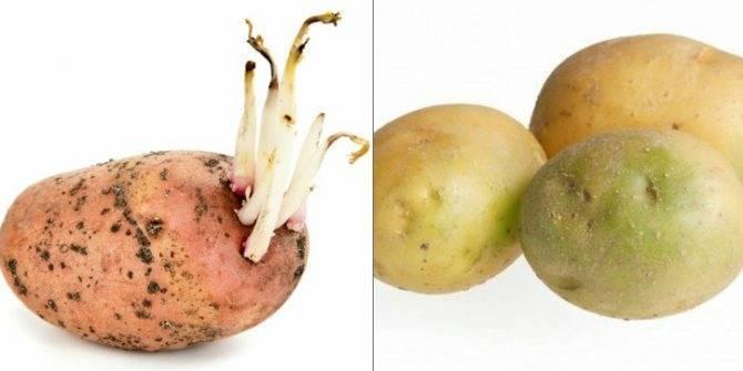 Можно ли жареную картошку кормящей маме: особенности приготовления картошки при гв (видео)