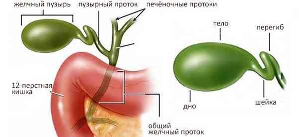 Деформация желчного пузыря у ребенка: причины и лечение