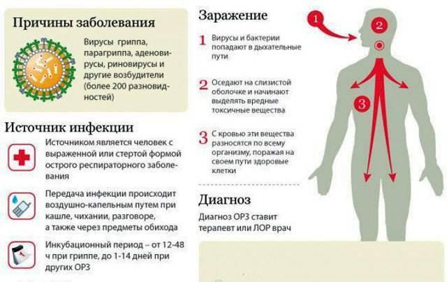 Сколько может держатся температура у ребенка при орви