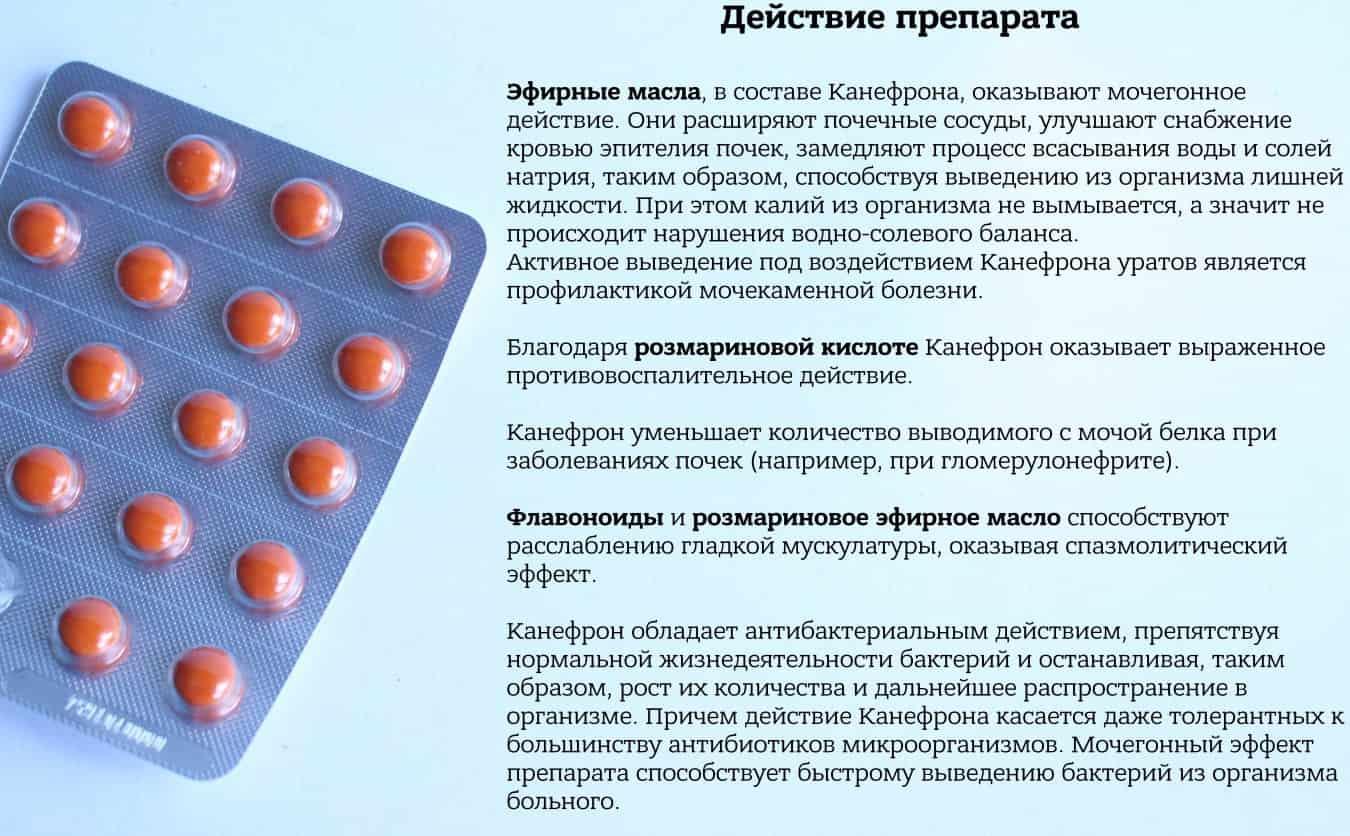 Канефрон детям: инструкция по применению капель в детской дозировке и для грудничков, прием при цистите, отзывы