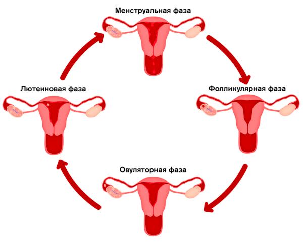 Девочке о менструации