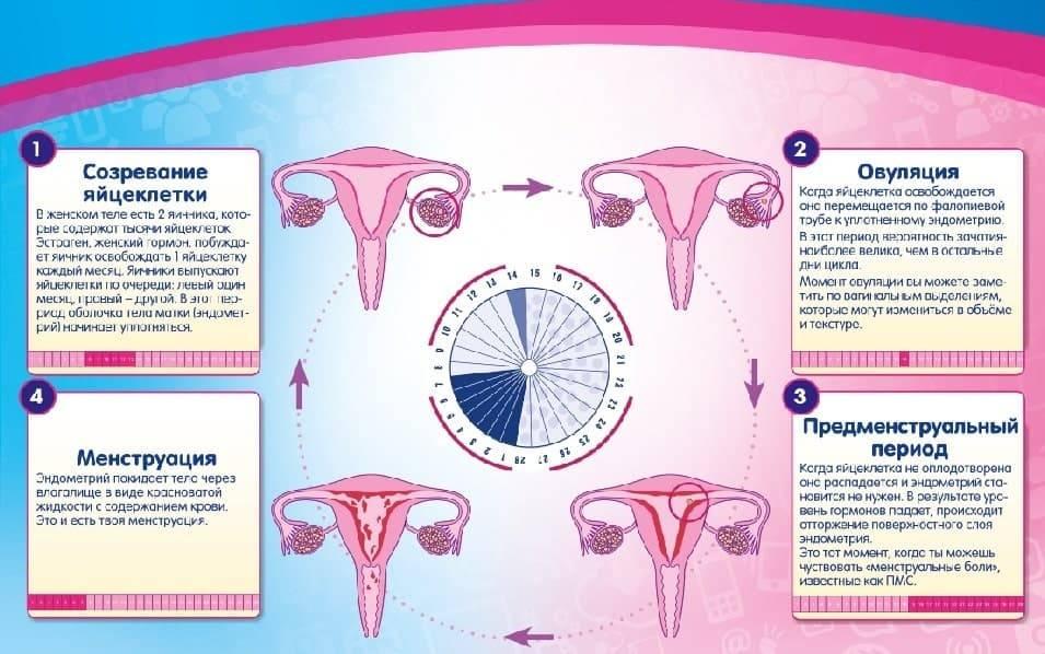 Выделения перед месячными и при беременности: отличия, симптомы, проявления, которые можно диагностировать самостоятельно