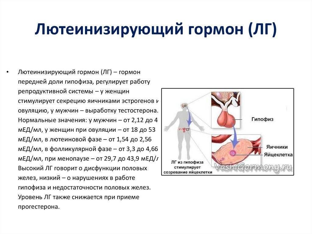 Лютеинизирующий гормон: норма у мужчин и женщин