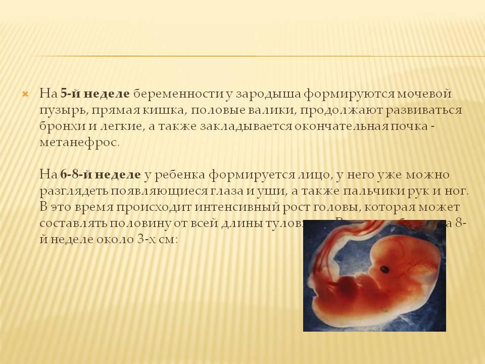 Замершая беременность после эко: причины и последствия