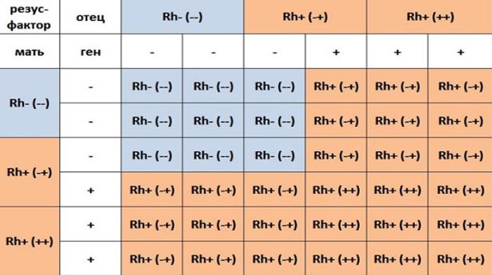 Калькулятор «группа крови и резус-фактор ребенка»