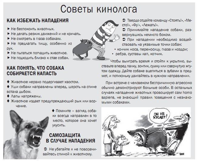 Ребенка укусила собака что делать, надо ли ему делать прививку против бешенства, признаки заболевания, привитая или нет