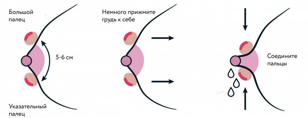 Как разработать грудь | уроки для мам