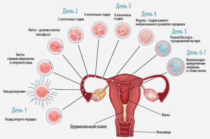 Как задержать месячные у женщин на день и на несколько дней в домашних условиях препаратами, противозачаточными и народными средствами с отзывами и советами врачей | qulady
