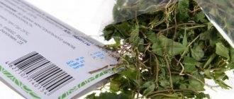 Петрушка для месячных: отвары и настои при задержке, поможет ли растение вызвать менструацию, как заварить и пить, чтобы добиться ускорения процесса?