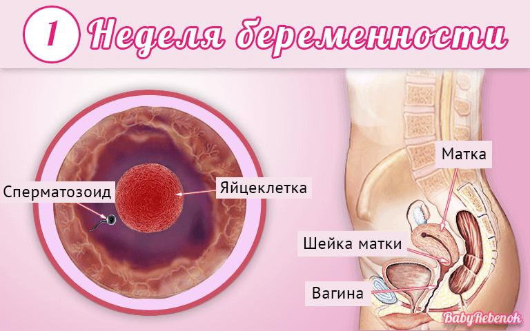 Ощущения в животе на ранних сроках беременности: первые признаки и тревожные симптомы