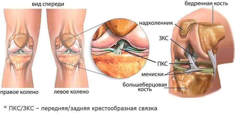 К какому врачу обращаться если болит колено: терапевт, ревматолог, ортопед