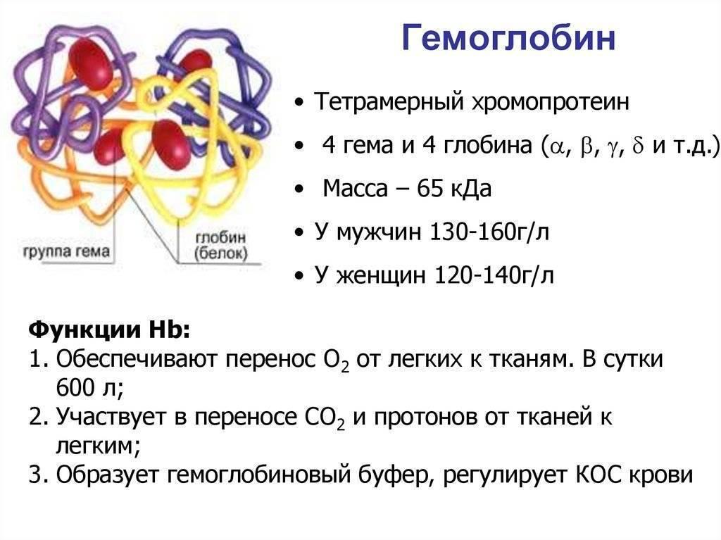 Чем можно поднять гемоглобин ребенку 6 месяцев. как повысить гемоглобин у детей. как повысить гемоглобин грудному ребенку