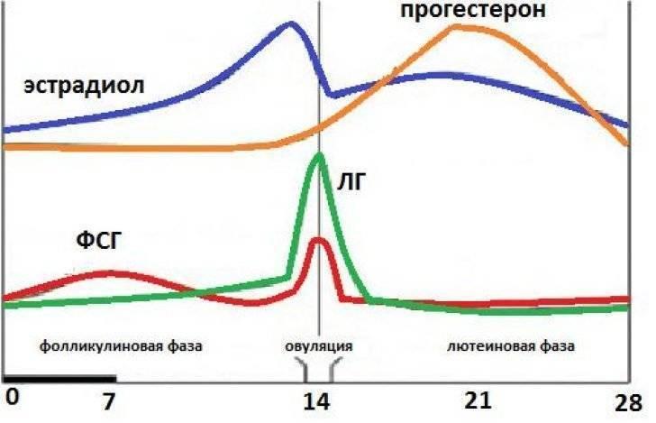 Прогестероновые качели – почему уровень прогестерона непостоянен и как справиться с его патологическим повышением