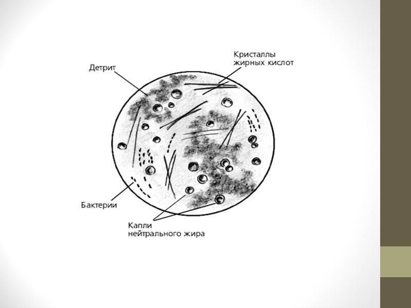 Эритроциты, лецитиновые зерна в спермограмме