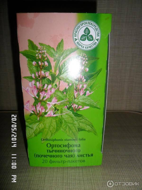 Почечный чай: полезные свойства и противопоказания для взрослых и детей, инструкции по применению