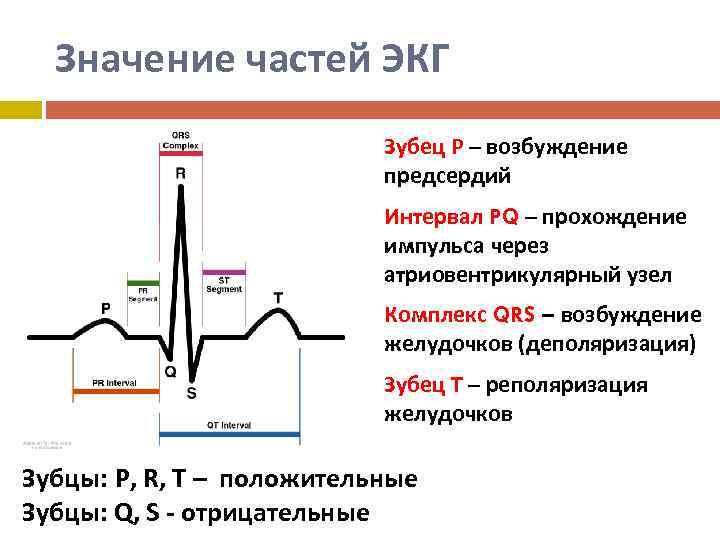 Электрокардиография. экг ребенку: как подготовиться к процедуре?