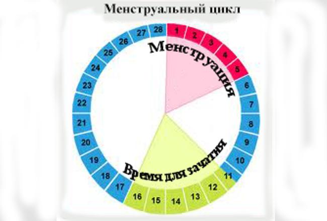Через сколько дней обычно начинаются месячные после овуляции?