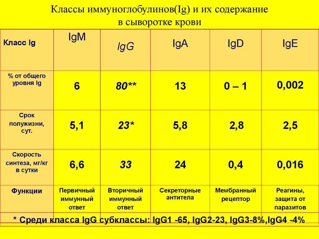 Все о повышении и понижении иммуноглобулина e и g в крови