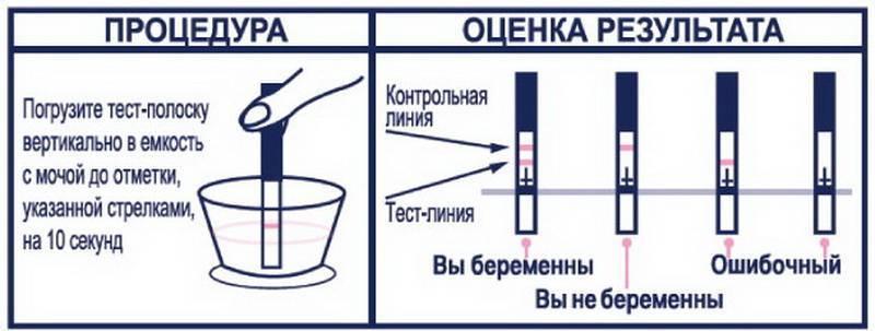 Какой стороной опускать тест на беременность в мочу evitest. horoshayaberemennost.ru