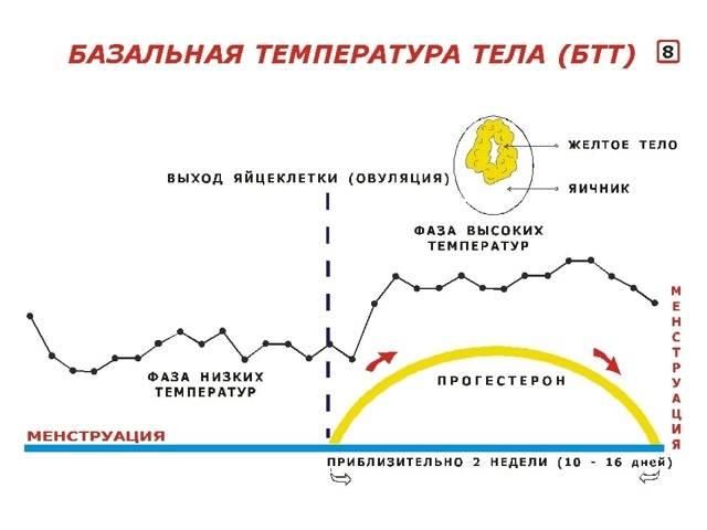 Почему может повышаться температура тела перед месячными: возможные причины