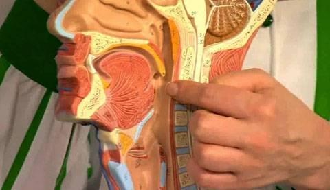 Как лечить кашель от соплей стекающих по задней стенке у ребенка лечение