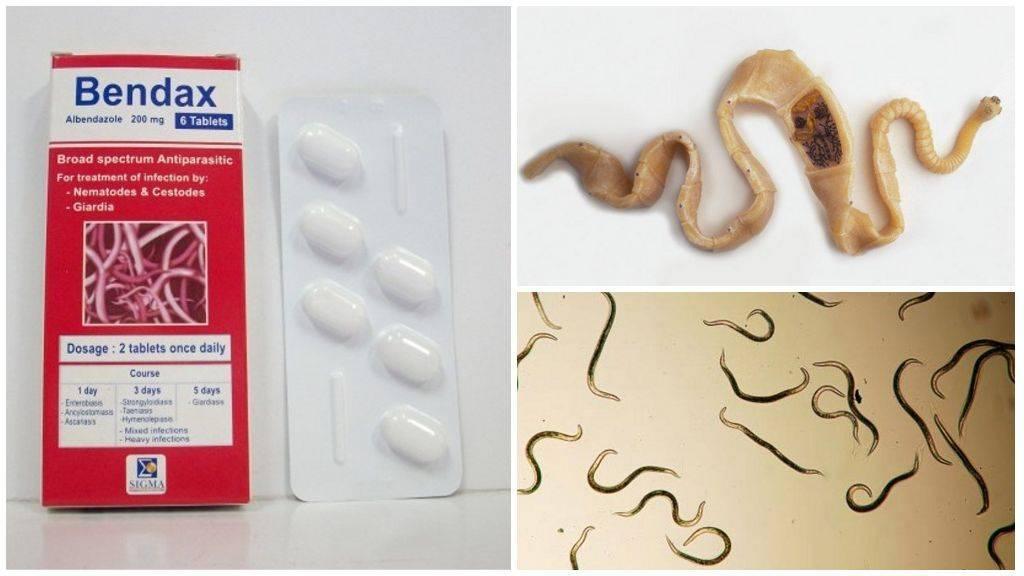 Топ самых эффективных таблеток от глистов