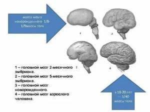 Незрелость головного мозга у новорожденных: что такое нейрофизиологическая незрелость коры мозга у ребенка - признаки и последствия, лечение