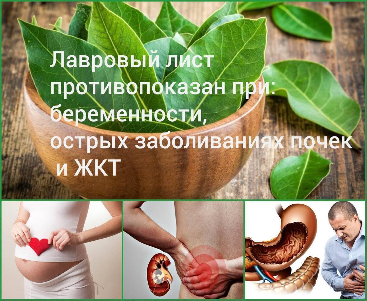 Лавровый лист для прерывания беременности рецепт