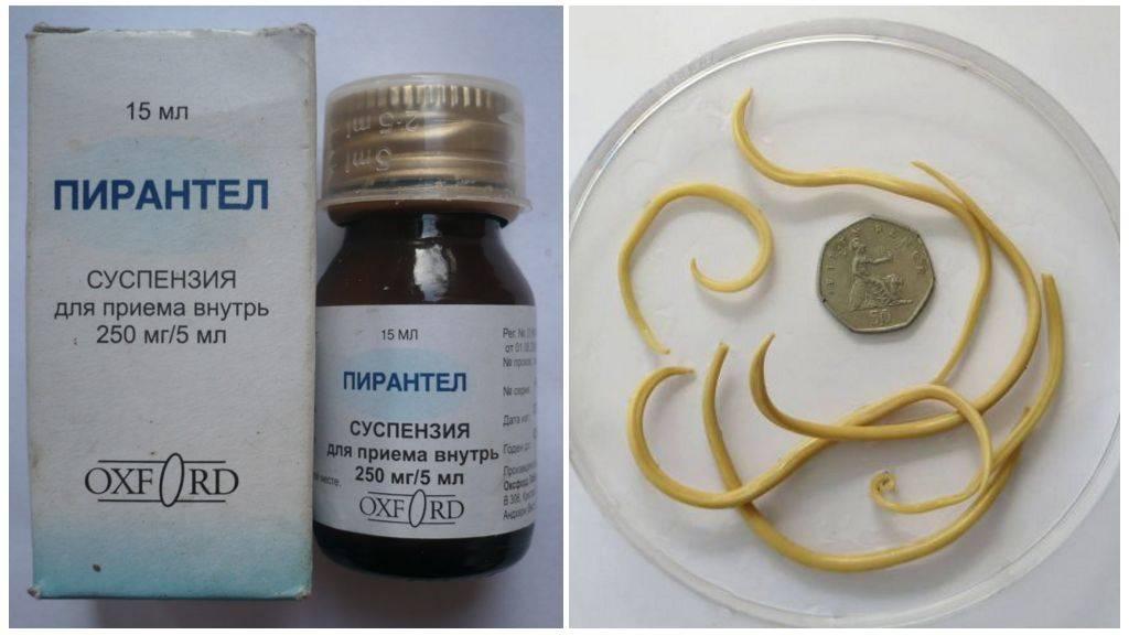 Таблетки от глистов — вермокс и другие аналоги против паразитов