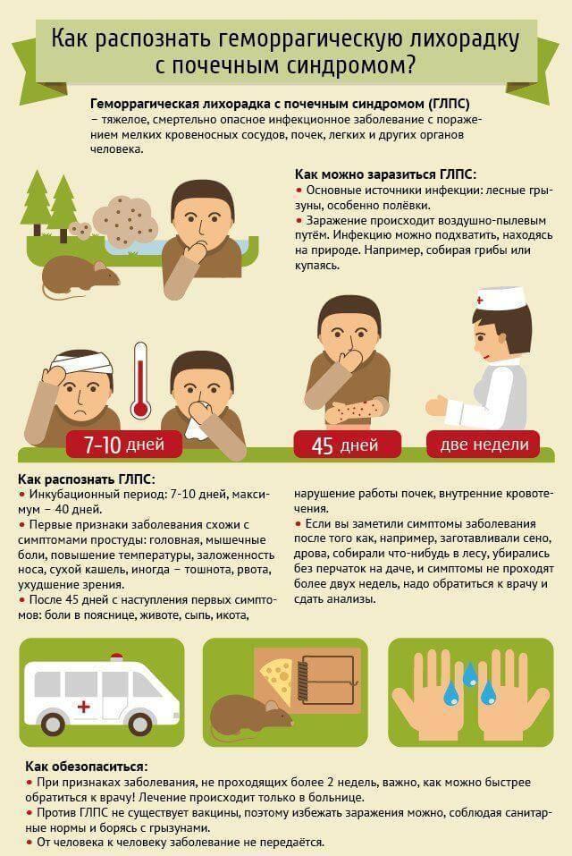 Мышиная лихорадка: симптомы у детей, лечение и профилактика заболевания | заболевания | vpolozhenii.com