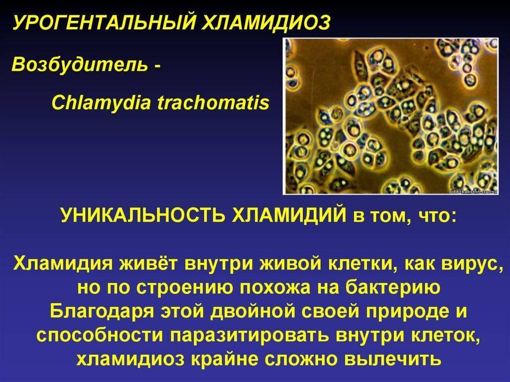 Хламидиоз: как передаются хламидии, к чему приводят, чем лечить заражение