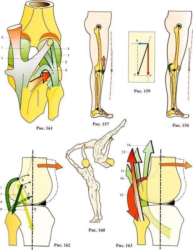 Почему болит в колене при приседании и вставании