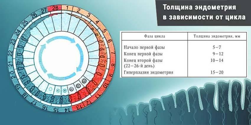 Размеры фолликула: таблица норм доминантного компонента яичника при овуляции или зачатии и когда он лопается