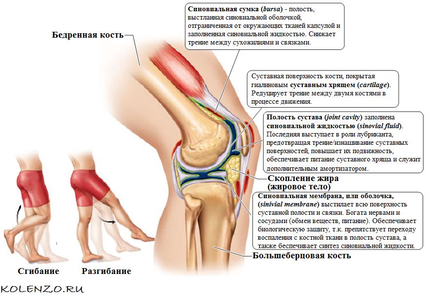 После родов появляется боль в коленях - почему и что делать?