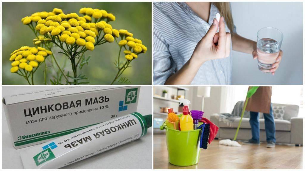 Как избавиться от остриц в домашних условиях навсегда. лекарства и народные средства от остриц