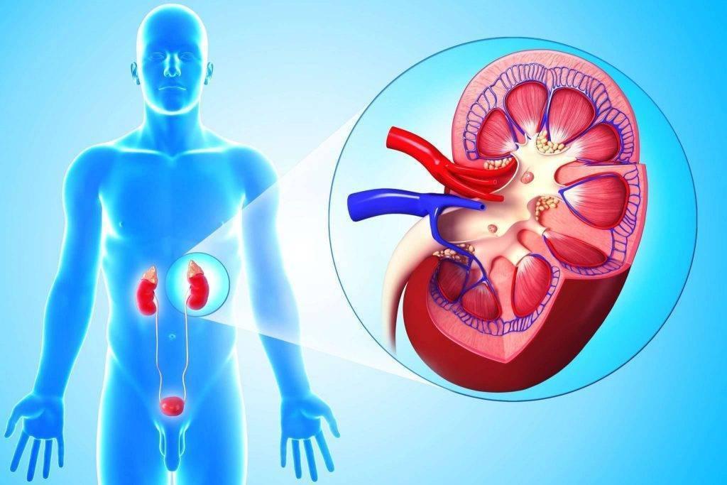 Симптомы и лечение инфекций мочевыводящих путей у детей