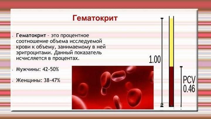 У ребенка повышены эритроциты в крови: причины, что делать при повышенном значении