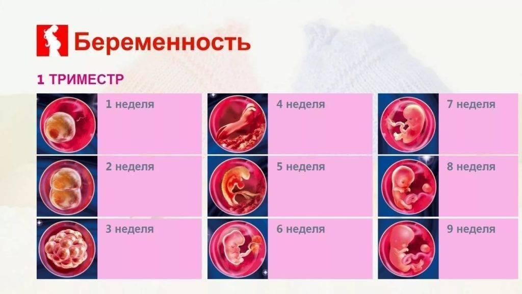 Критические периоды во время беременности. какие недели наиболее опасны?