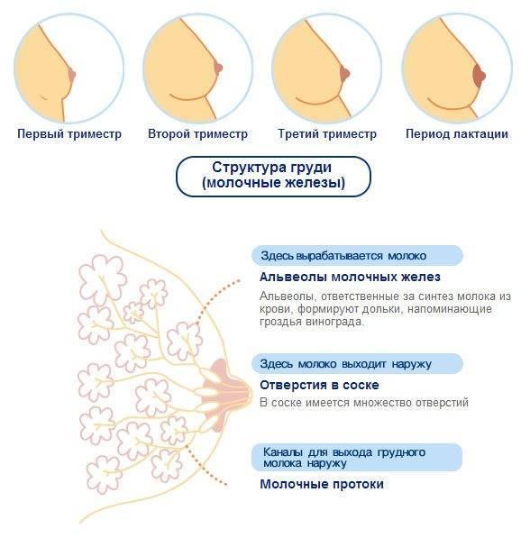 Болит грудь за неделю до месячных: почему это происходит и что делать?