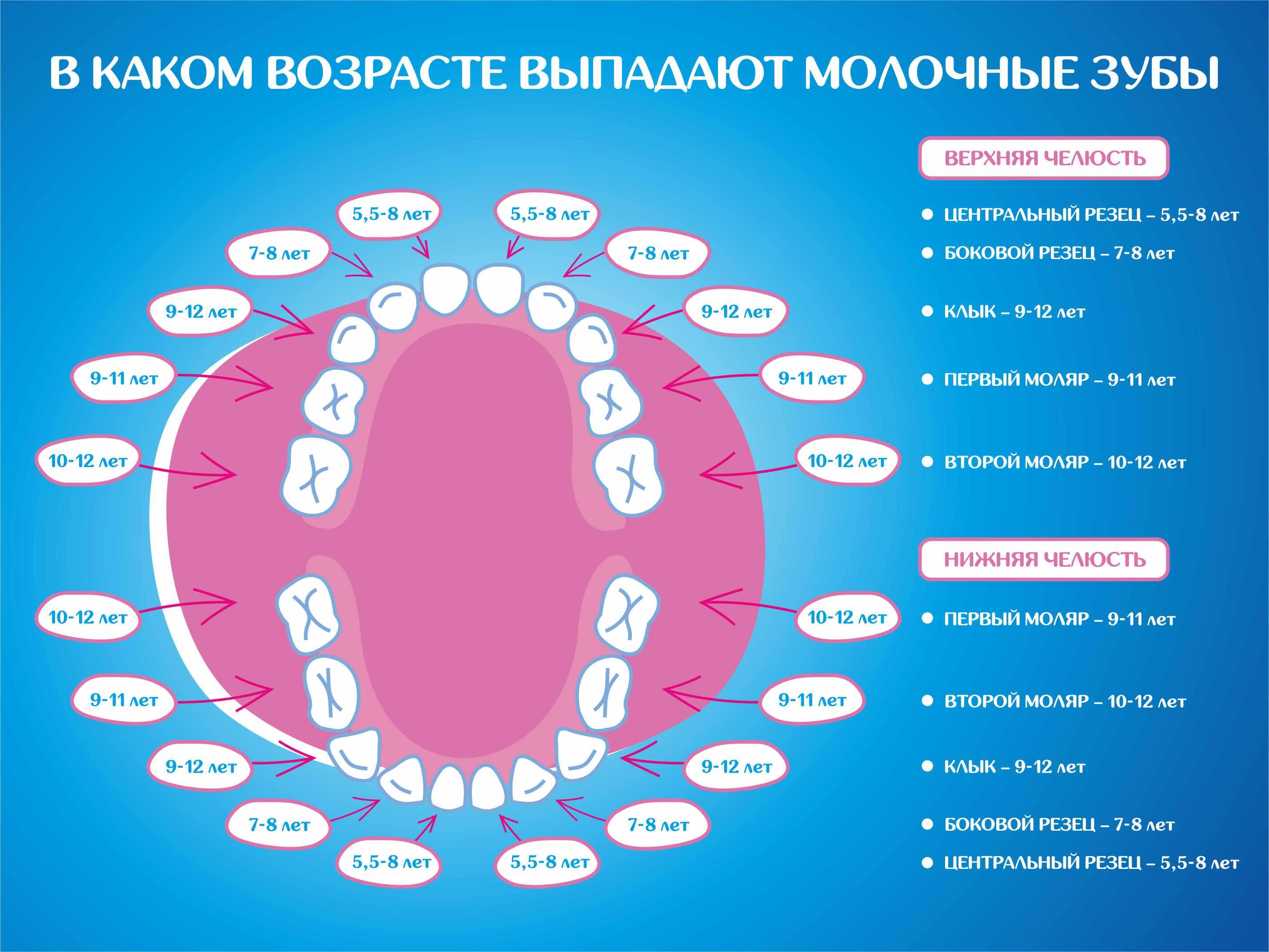 Как отличить молочный зуб от коренного: как определить и понять разницу, что делать, если за молочным зубом растет коренной