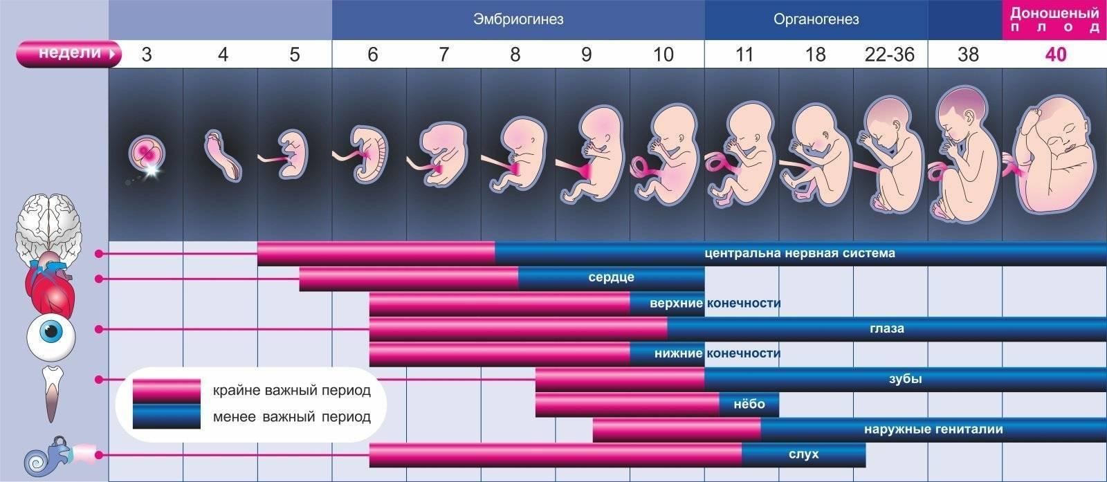 Беременность по месяцам, что происходит с 1 по 10 месяц беременности
