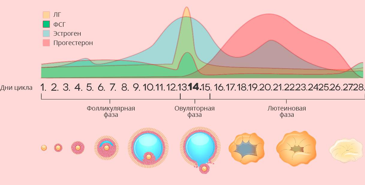 Повышенный прогестерон в лютеиновой фазе - причины и способы нормализации
