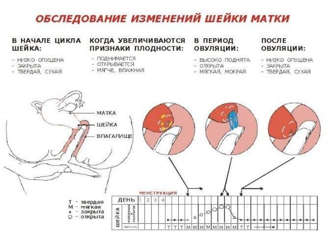 Болят яичники перед месячными - причины боли в правом или левом яичнике
