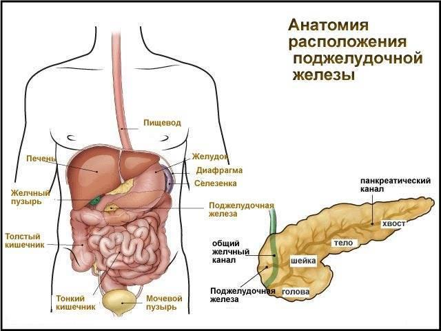 Увеличена поджелудочная железа у ребенка, причины реактивного увеличения у детей