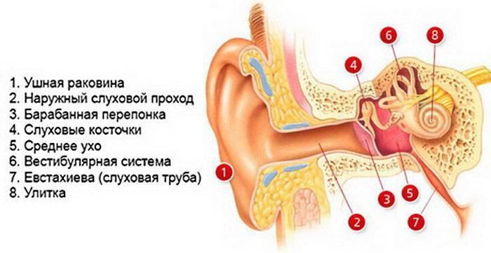 Заложило ухо и болит: причины, симптомы и методы лечения