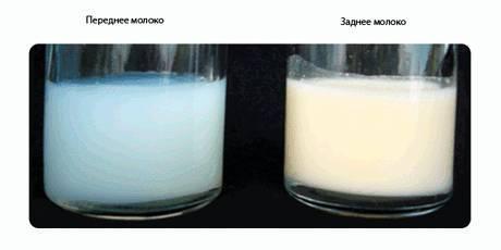 Почему грудное молоко бывает желтого цвета?